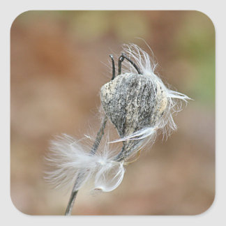 Milkweed pod photo square sticker