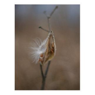 Milkweed Pod Post Card