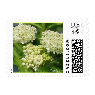 Milkweed Postage Stamp