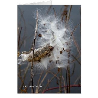 Milkweed Seeds Card