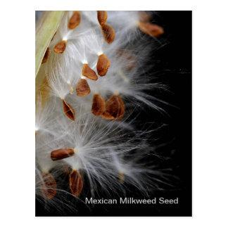 Milkweed seeds postcard