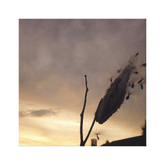 Milkweed Sunrise Canvas