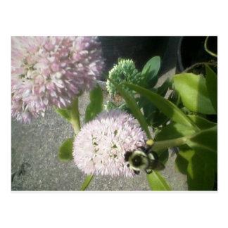 milkweed thistle bee postcard