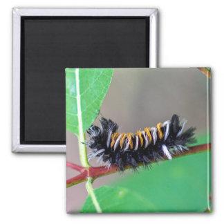Milkweed Tussock Moth Caterpillar Magnet