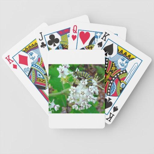 Milkweed y monarca cartas de juego