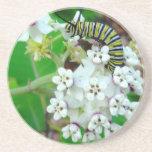 Milkweed y monarca posavasos diseño