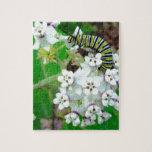 Milkweed y monarca puzzle con fotos