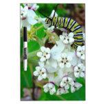 Milkweed y monarca tableros blancos
