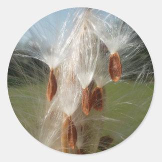Milkweeds Floating.jpg de la flora y de la fauna Pegatina Redonda