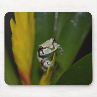 Milky Frog Mousepad
