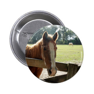 Mill Creek Horses Pinback Button