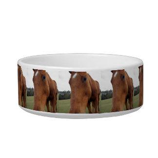 Mill Creek Rescue Horse Bowl