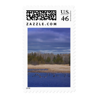 Mill Pond Stamps