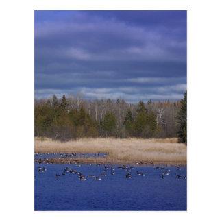 Mill Pond Postcard