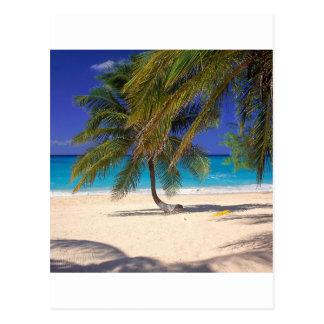 Milla tropical Gran Caimán de la isla siete Postales