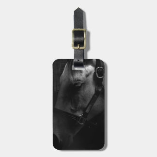 Million Dollar Tapit Filly Tag For Luggage