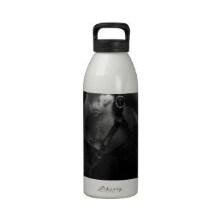 Million Dollar Tapit Filly Reusable Water Bottle