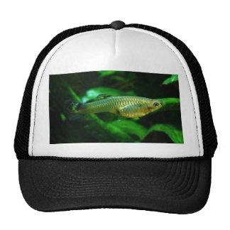 Millionfish or Guppy Poecilia Reticulata Hats