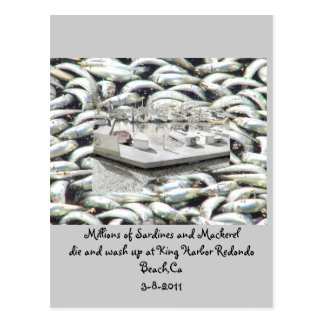 Millions of Sardines 3-8-2011_ Postcard