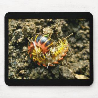 Millipede Polydesmida (Sigmoria aberrans) Items Mouse Pad