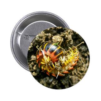 Millipede Polydesmida (Sigmoria aberrans) Items Pinback Button