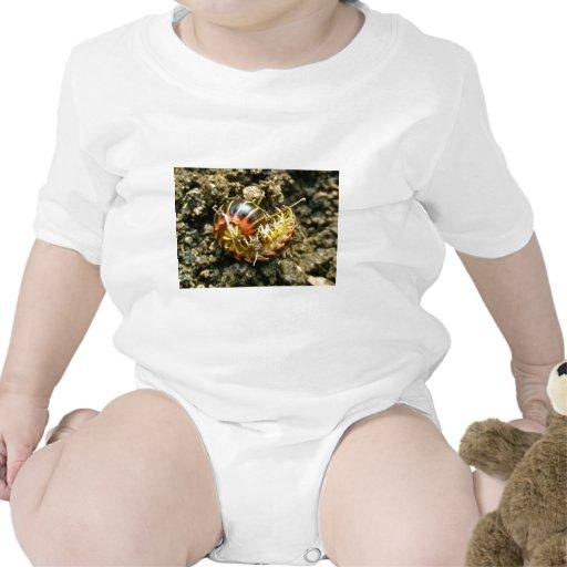 Millipede Polydesmida (Sigmoria aberrans) Items Tee Shirts