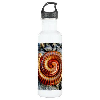 Millipede Trigoniulus Corallinus Curled Arthropod 24oz Water Bottle
