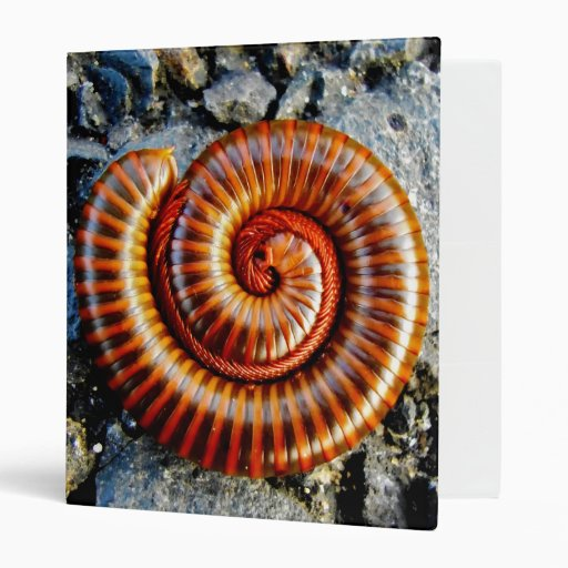 Millipede Trigoniulus Corallinus Curled Arthropod 3 Ring Binders