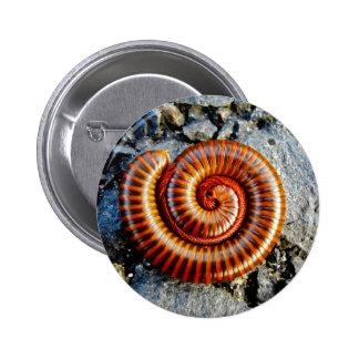 Millipede Trigoniulus Corallinus Curled Arthropod Button