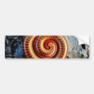 Millipede Trigoniulus Corallinus Curled Arthropod Car Bumper Sticker