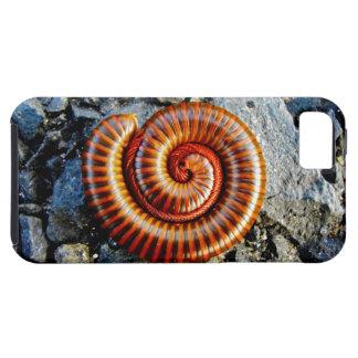 Millipede Trigoniulus Corallinus Curled Arthropod iPhone 5 Case