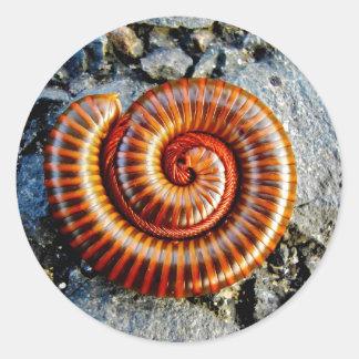 Millipede Trigoniulus Corallinus Curled Arthropod Classic Round Sticker