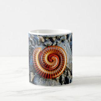 Millipede Trigoniulus Corallinus Curled Arthropod Classic White Coffee Mug