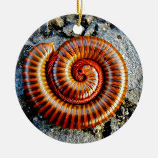 Millipede Trigoniulus Corallinus Curled Arthropod Double-Sided Ceramic Round Christmas Ornament