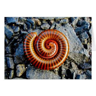 Millipede Trigoniulus Corallinus Curled Arthropod Greeting Card