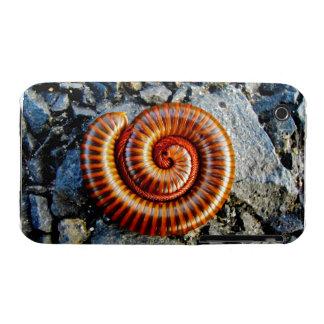 Millipede Trigoniulus Corallinus Curled Arthropod iPhone 3 Cases