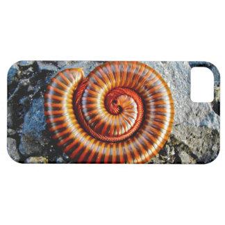 Millipede Trigoniulus Corallinus Curled Arthropod iPhone SE/5/5s Case