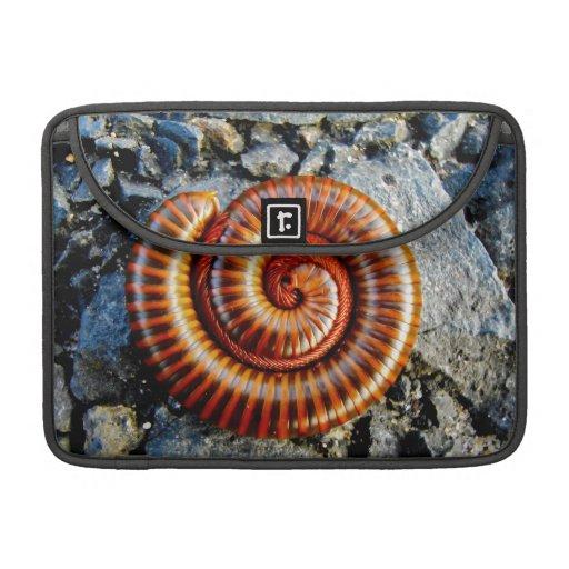Millipede Trigoniulus Corallinus Curled Arthropod MacBook Pro Sleeve