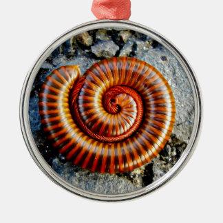 Millipede Trigoniulus Corallinus Curled Arthropod Round Metal Christmas Ornament