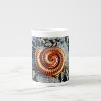 Millipede Trigoniulus Corallinus Curled Arthropod Tea Cup