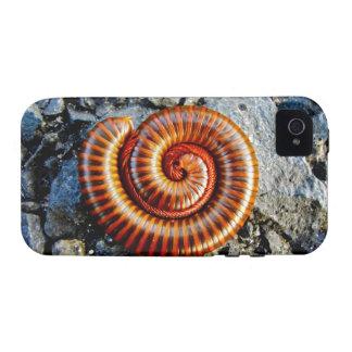 Millipede Trigoniulus Corallinus Curled Arthropod Vibe iPhone 4 Cases