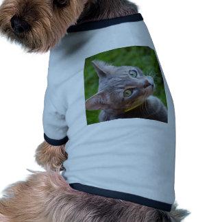 Milo el Tabby de plata Camisetas De Mascota