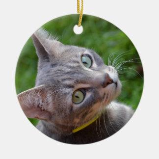 Milo el Tabby de plata Ornamentos De Navidad