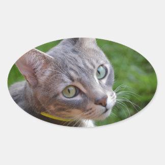Milo el Tabby de plata Colcomanias Oval Personalizadas