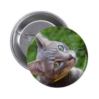 Milo el Tabby de plata Pins