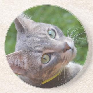Milo el Tabby de plata Posavasos Personalizados