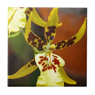 Miltonia amarillo I Azulejo Cuadrado Pequeño
