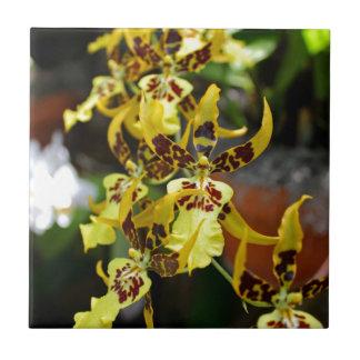 Miltonia amarillo II Azulejo Cuadrado Pequeño