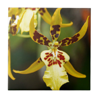 Miltonia amarillo III-2020, z Azulejo Cuadrado Pequeño