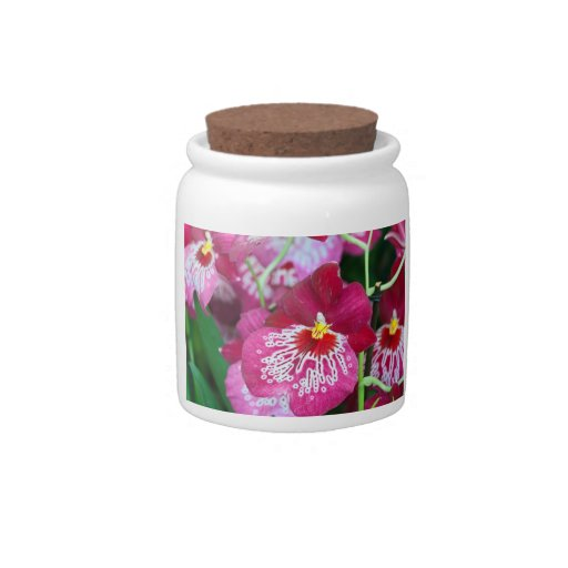 Miltonia orchid flower candy jar